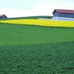Налоговый вычет за приобретение земельных участков